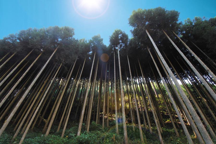 杉の薪特性